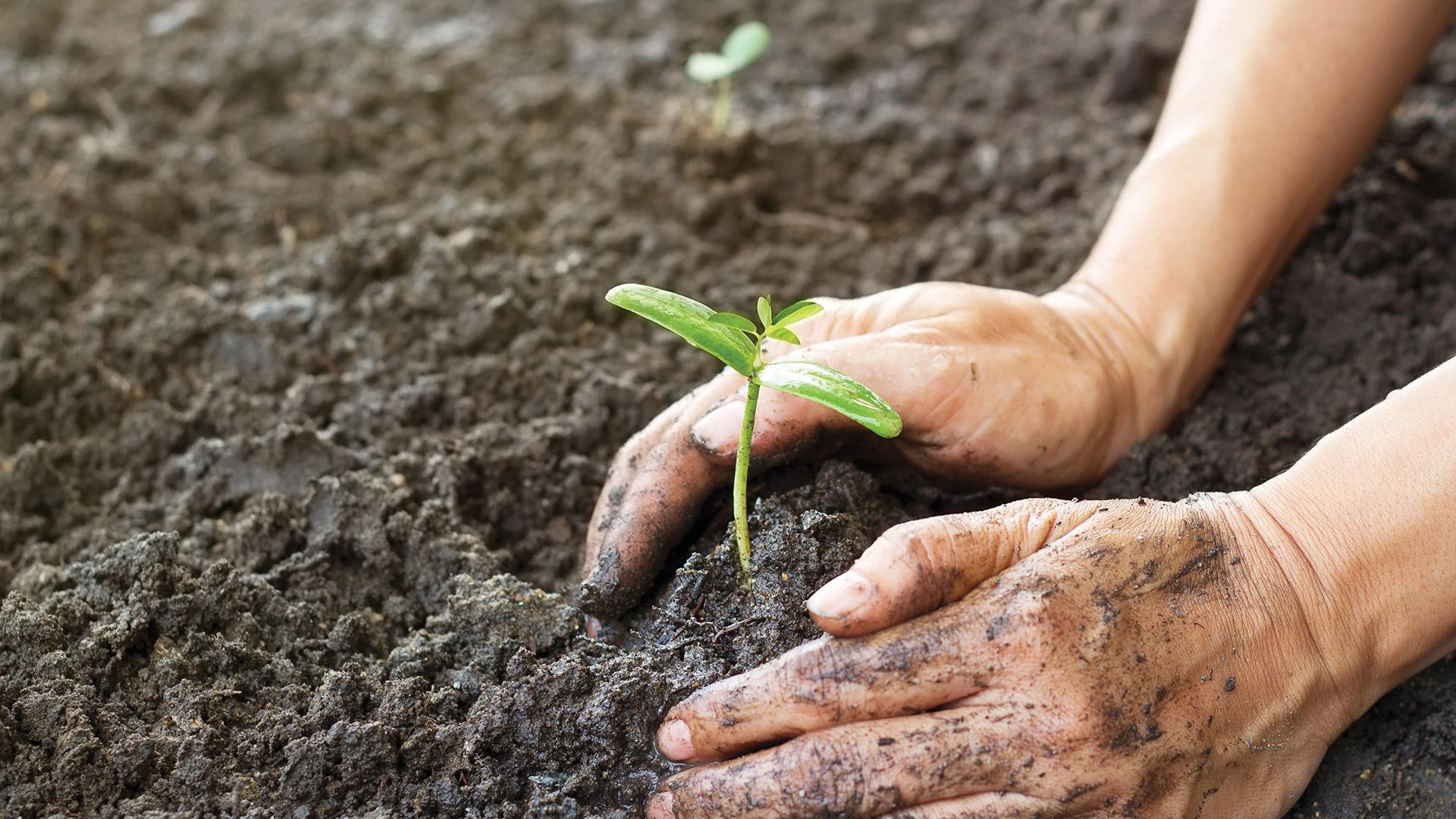 все почва охрана почвы картинки билетов